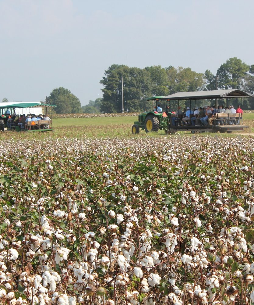 Visitor in wagons viewing cotton field during Cotton Tour