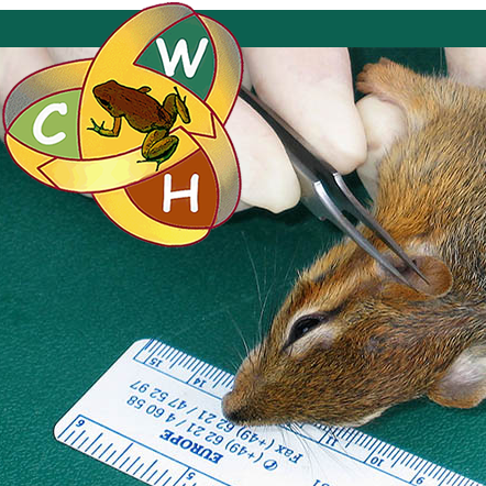 Assessing health of squirrel