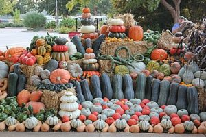 Fall crop display at West Tennessee REC